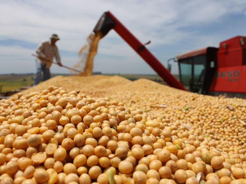Excelentes proyecciones de producción 2018/19 de cultivos estivales en la primera estimación.