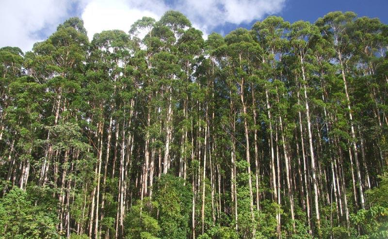 AFoA: 73 años de compromiso foresto industrial