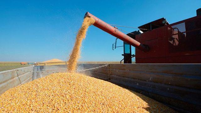 Récord de exportaciones de maíz: llegaron a 33 millones de toneladas