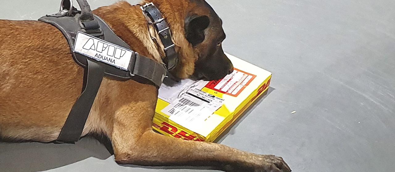 Dos canes de la aduana detectaron cocaína y éxtasis en envíos postales